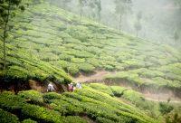 Kerala : évasion en terre divine