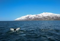 Baleines à bâbord, aurores à tribord