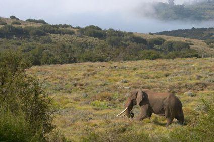 Trek Laikipia Masaï et safari