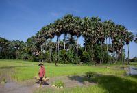 Balade cambodgienne