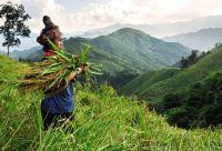 Rando et ethnies du nord Laos