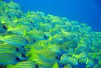Perle et atolls de l'océan Indien