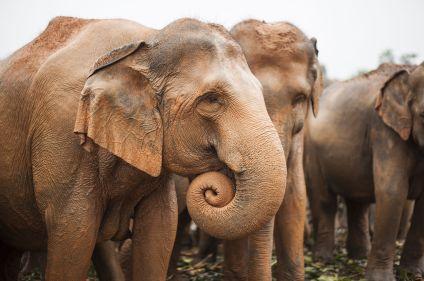 Bouddhas et éléphants du Sri Lanka