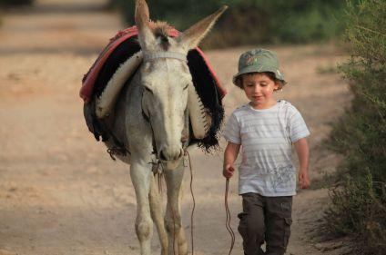 Des Berbères de l'Atlas à Essaouira