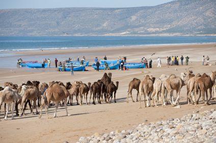 Marrakech, Essaouira, entre dunes et océan