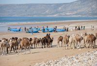 Charmes et douceurs d'Essaouira