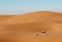 Marrakech, palmeraies et désert