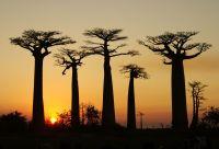 Grand tour de la Tsiribihina aux Pangalanes