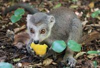 A la rencontre des animaux de Madagascar