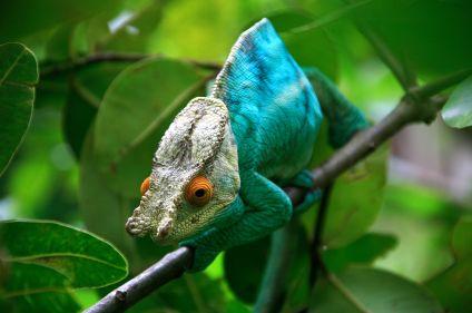 Parcs, tsingy et les îles du nord de Madagascar