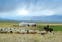 Sur les traces des gazelles de Mongolie