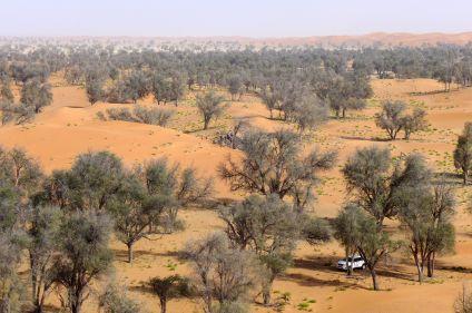 Oman, des dunes d'or aux dunes blanches