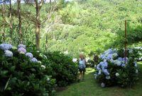 São Miguel, randonnées et détente sur l'île verte