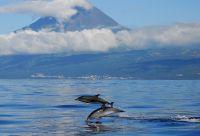 Escapade océane : volcans et baleines