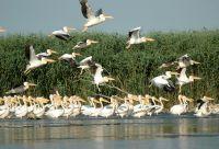 Grandeur nature, le delta du Danube