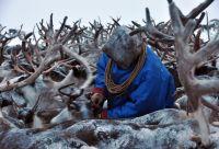 A la rencontre du peuple Nenets