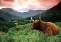La magie des Highlands