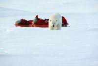 Sur les traces de l'ours