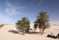 Oasis et dunes du Grand Erg oriental