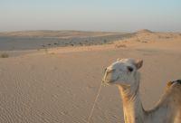 Villages, dunes et chameliers en herbe