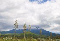 Mont Meru et Kilimandjaro