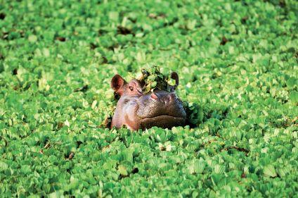 Savanes, lodge et plages en Tanzanie