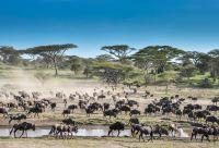 Au cœur de la grande migration du Serengeti