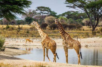 Safari, trilogie dans les parcs