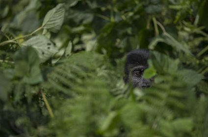 Objectif Primate avec Eric Le Boulch