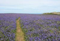 Sentiers côtiers du Pembrokeshire