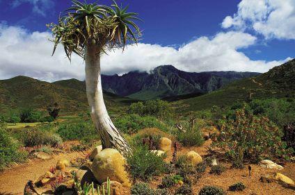 En piste pour les grands espaces d'Afrique du Sud