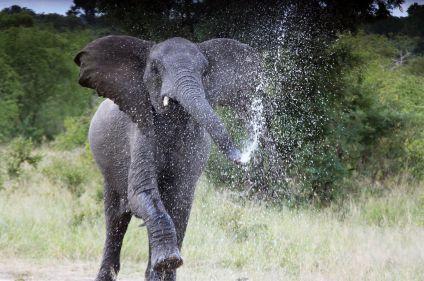 Essences sud-africaines : Kruger, Swaziland et St Lucia