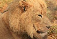 Du Cap au Kruger