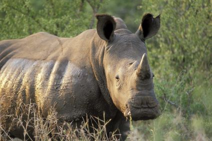 Boucle sauvage : entrevue avec l'Afrique australe