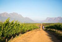 Cape Town et la route des vins à vélo