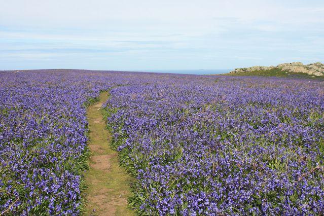 Voyage Sentiers côtiers du Pembrokeshire