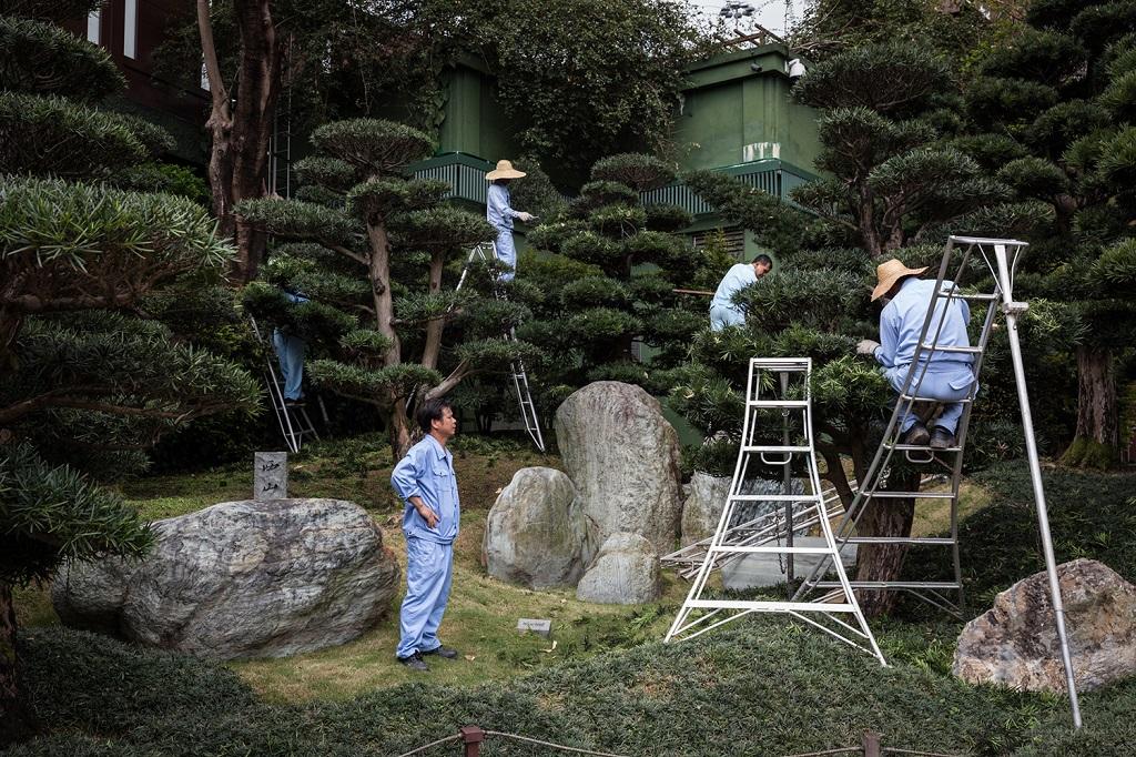 Des jardiniers à l'oeuvre sur des bonsaïs dans les jardins de Nan Lai.