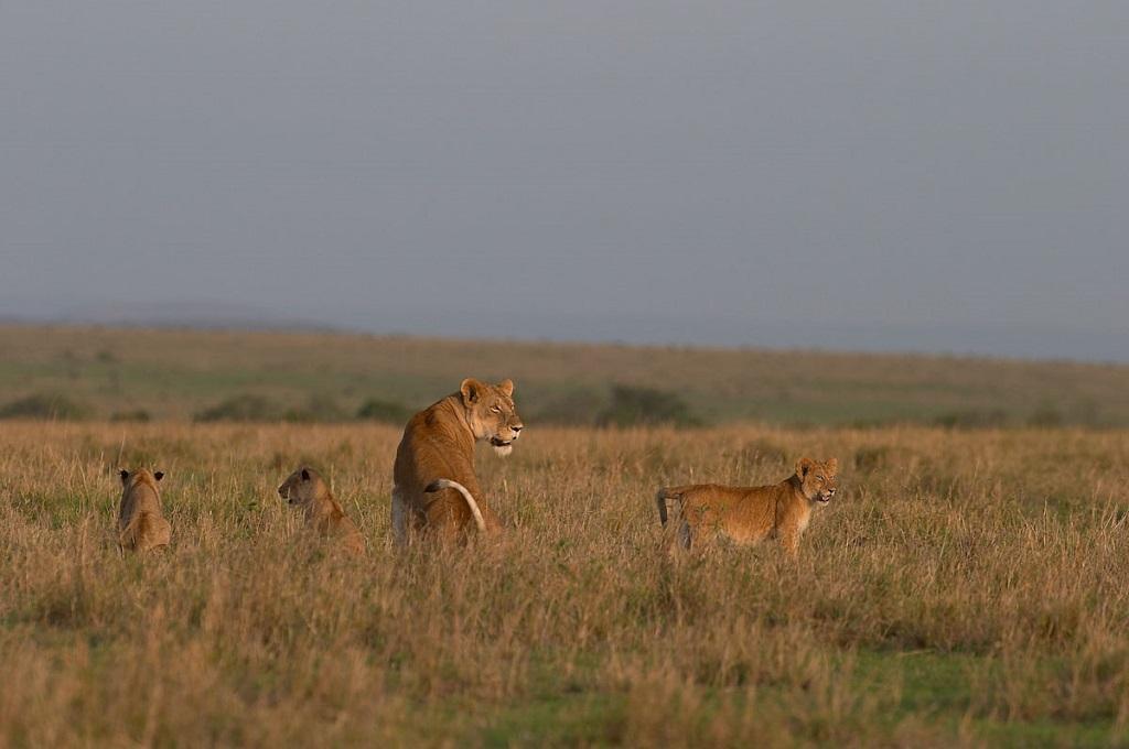 Réserve du Massai Mara - Vallée du Rift, Kenya