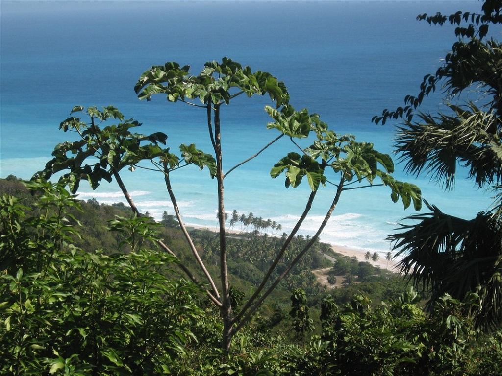 Plage près de Cachote, République Dominicaine