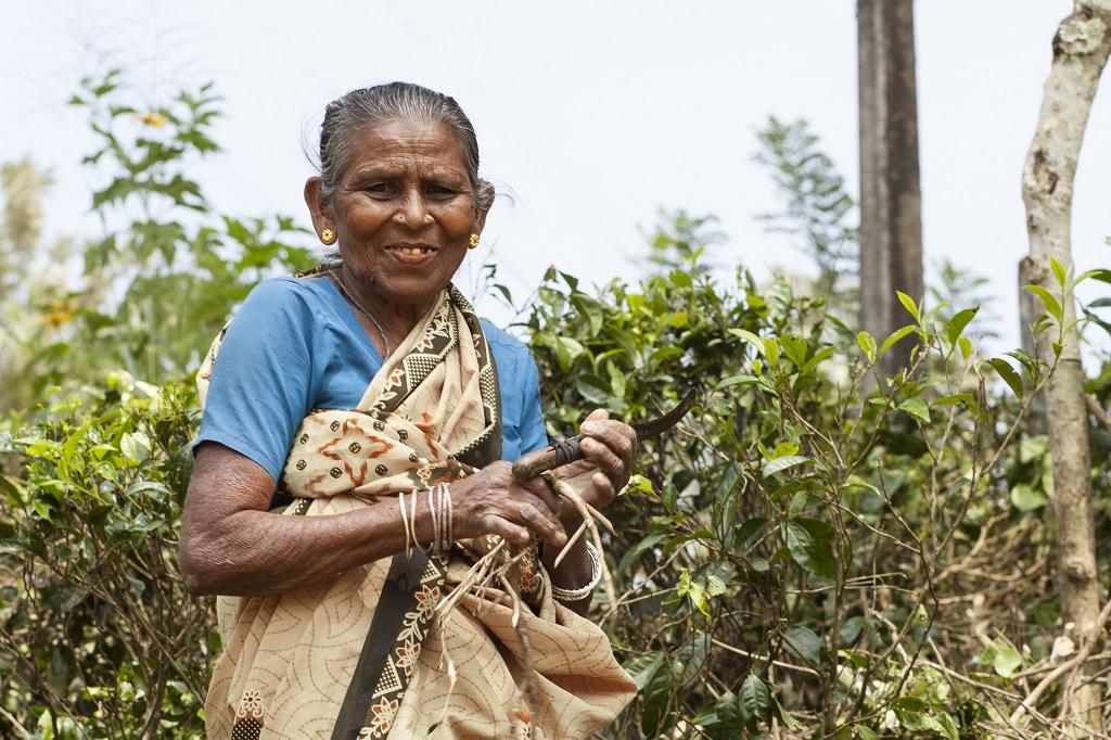 Paysanne tamoule entre Kandy et Nuwara Eliya