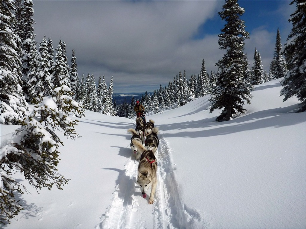 Traîneau à chiens dans les forêts du Québec - ©Gilles Granal