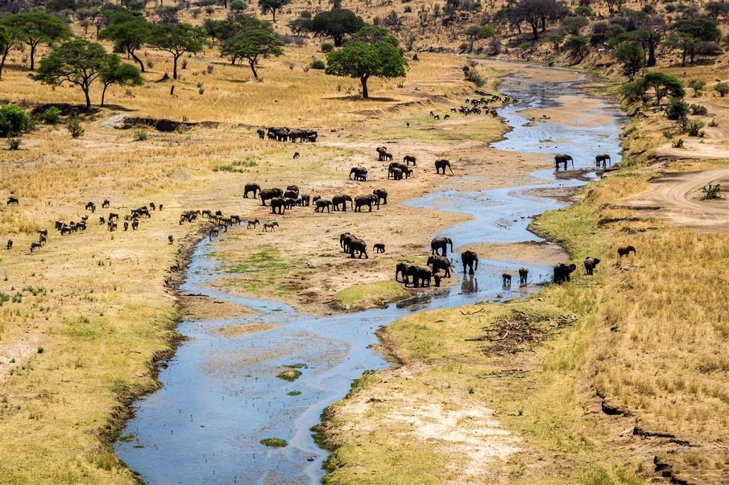 Eléphants, Parc national du Tarangire, Tanzanie