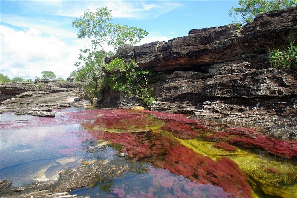 Rivière colorée de Caño Cristales