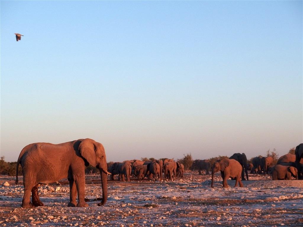 Parc national d'Etosha - Kunene - Namibie