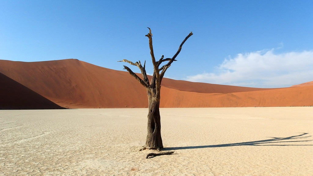 Dead Vlei, Désert du Namib