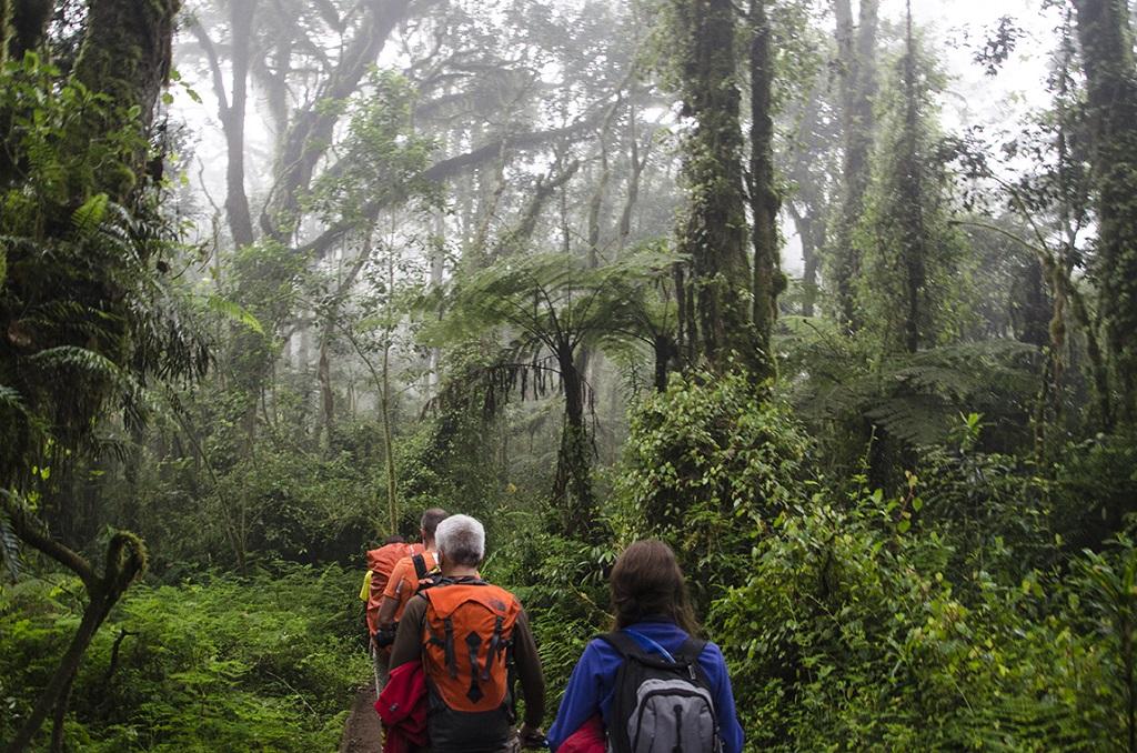 Randonnée dans la forêt tropicale, voie Machame