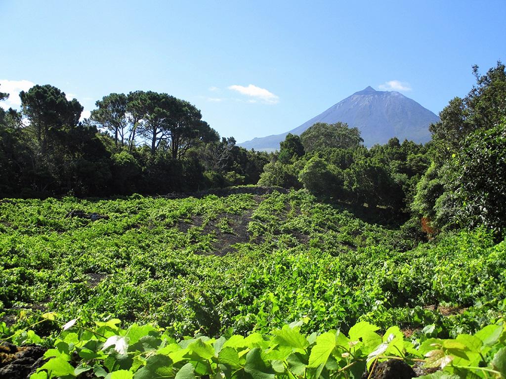 Pico -Île de Pico, Açores Portugal