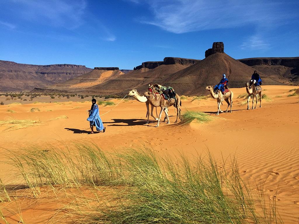 Randonnée chamelière dans les dunes de l'Adrar
