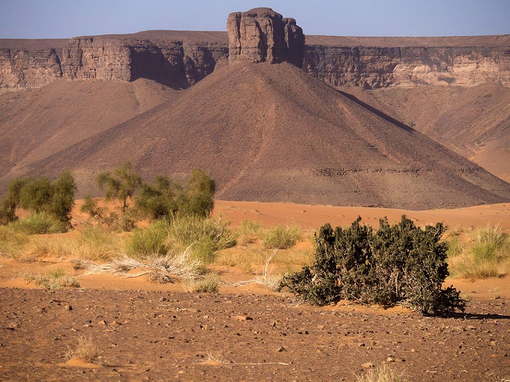Oued el Tenzzent, les oasis de l'Adrar