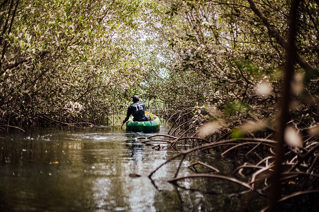 Kayak à travers la mangrove